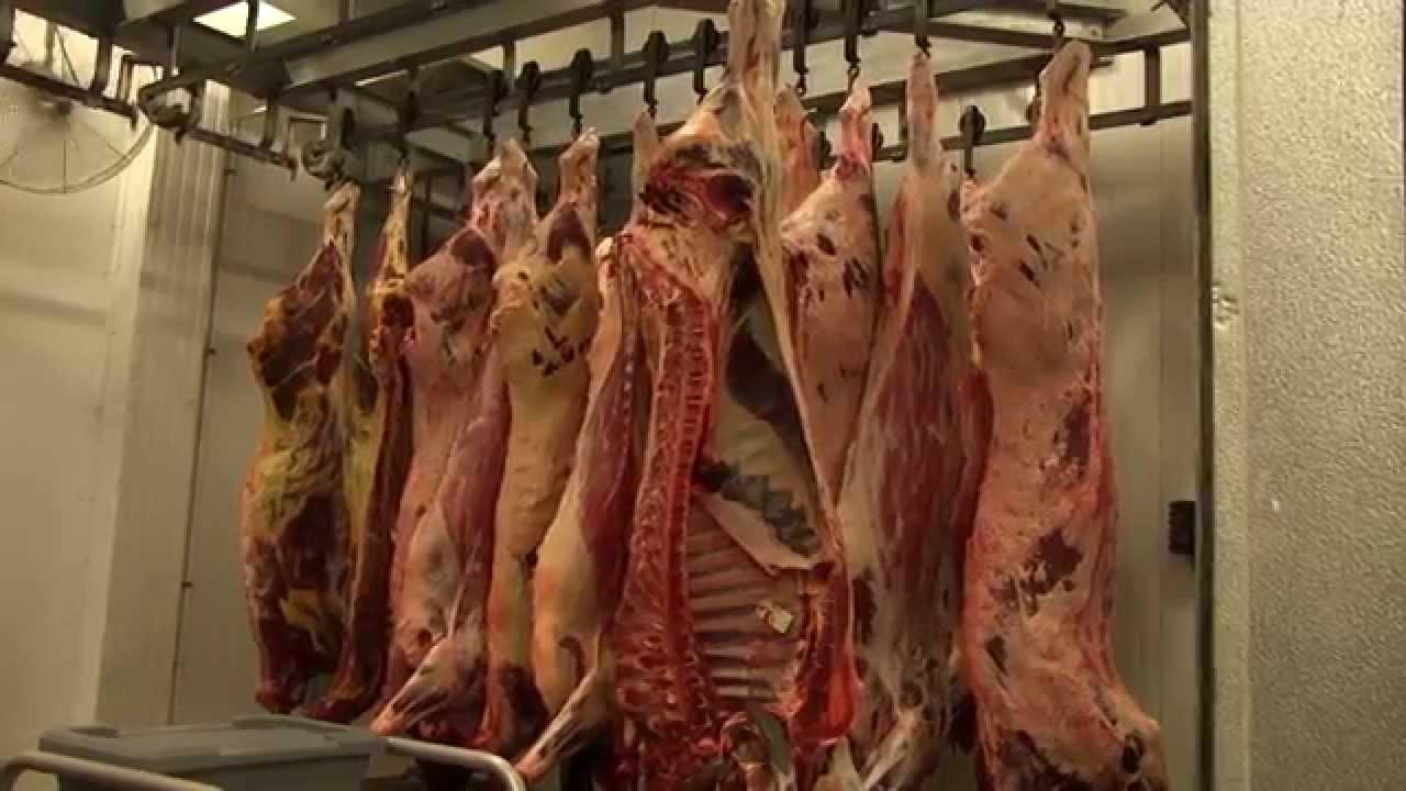Beef Cattle Fattening Farming Business Plan