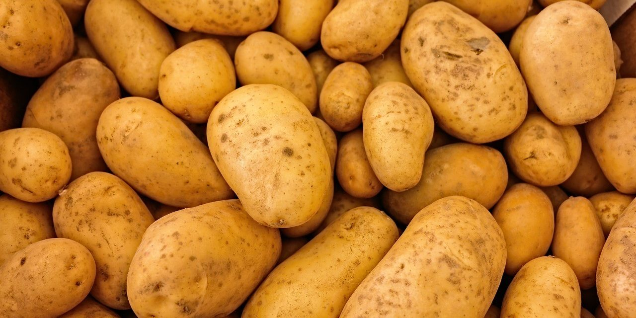 Starting Potato Farming Business in South Africa – Business Plan (PDF, Word & Excel)