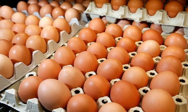 Chicken Egg Production Business Plan