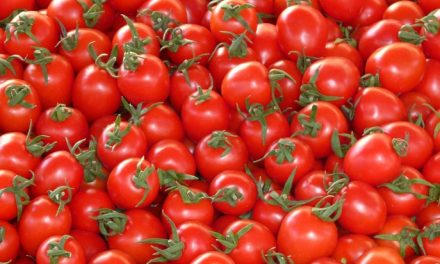 Starting Tomato Farming Business in South Africa – Business Plan (PDF, Word & Excel)