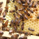 Starting Honey Beekeeping Business in South Africa – Business Plan (PDF, Word & Excel)