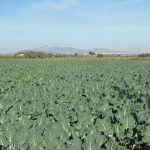Starting A Vegetable Farming Business In South Africa